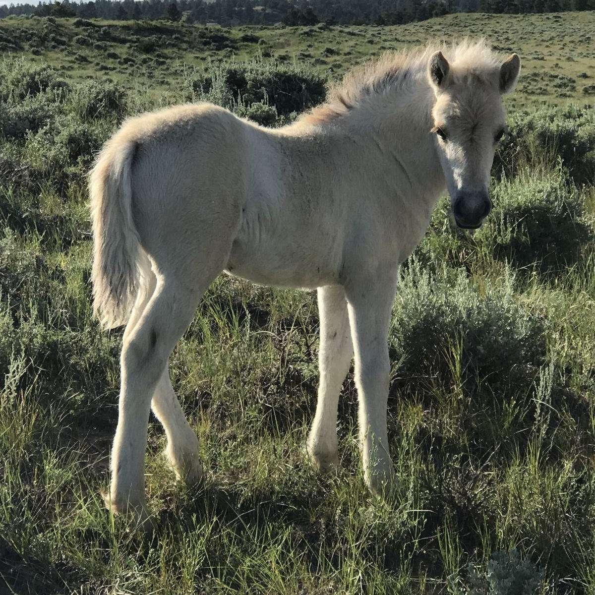 Snowy Ridge Horses LLC