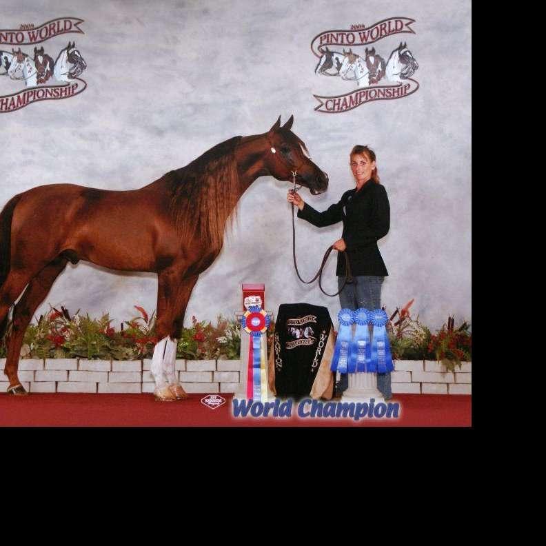 Performance Arabians & Sporthorses