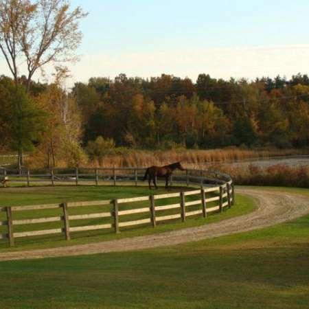 Meadow Lake Farm