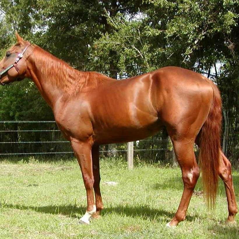 Lang's Quarter Horses