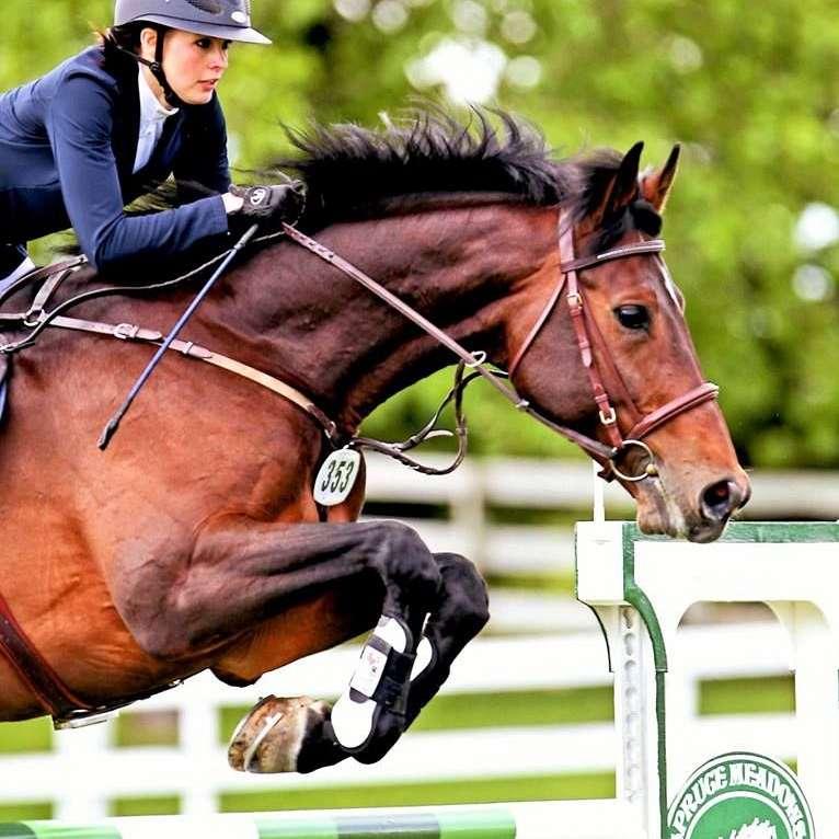 Kveder Equestrian