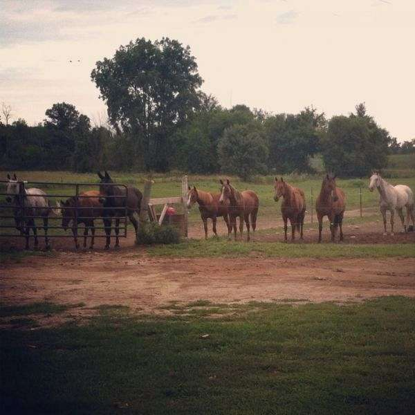 Stoney Creek Quarter Horses