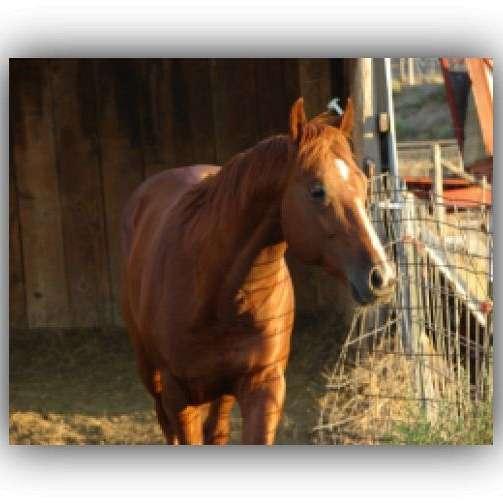 JB Quarterhorse Ranch