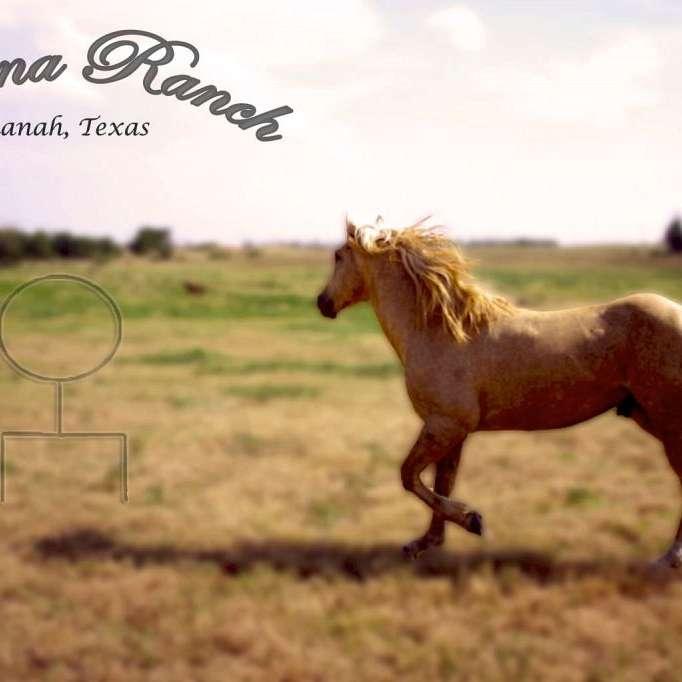 Texana Ranch Quarter Horses