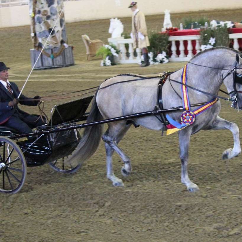 Peet Equestrian