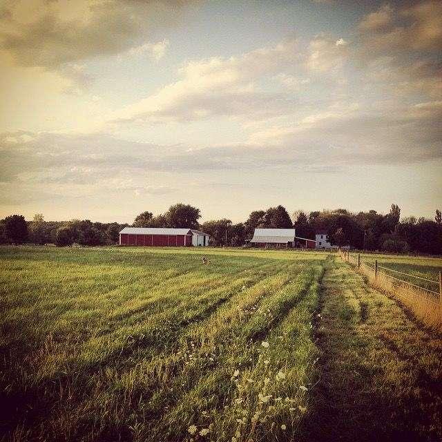 Ridgeback Creek Cattle Co