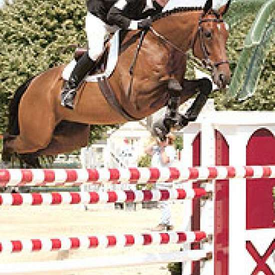 Team Wallace Eventing