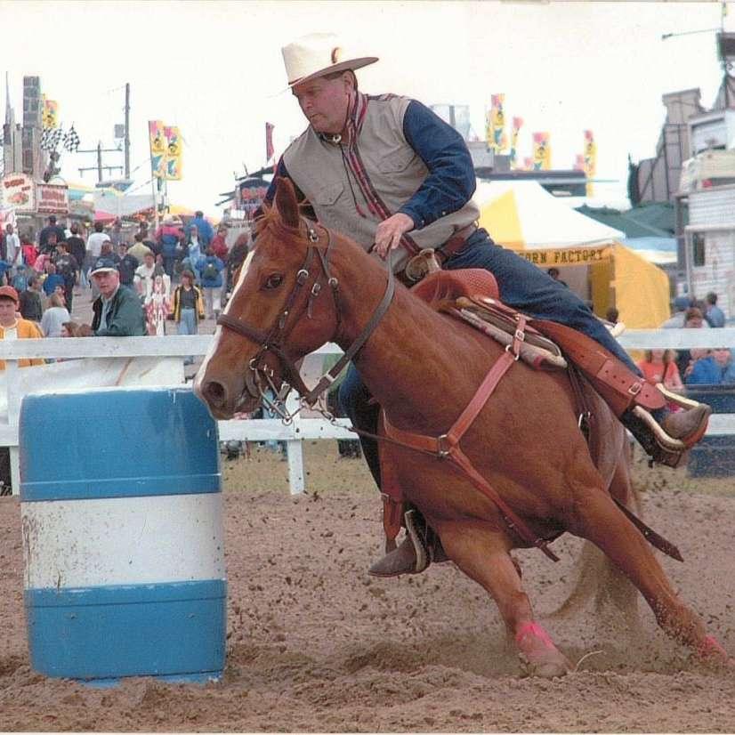 C W Horses  Ponies