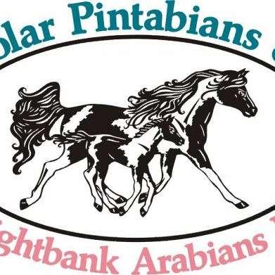 Polar Pintabians & Brightbank Arabians