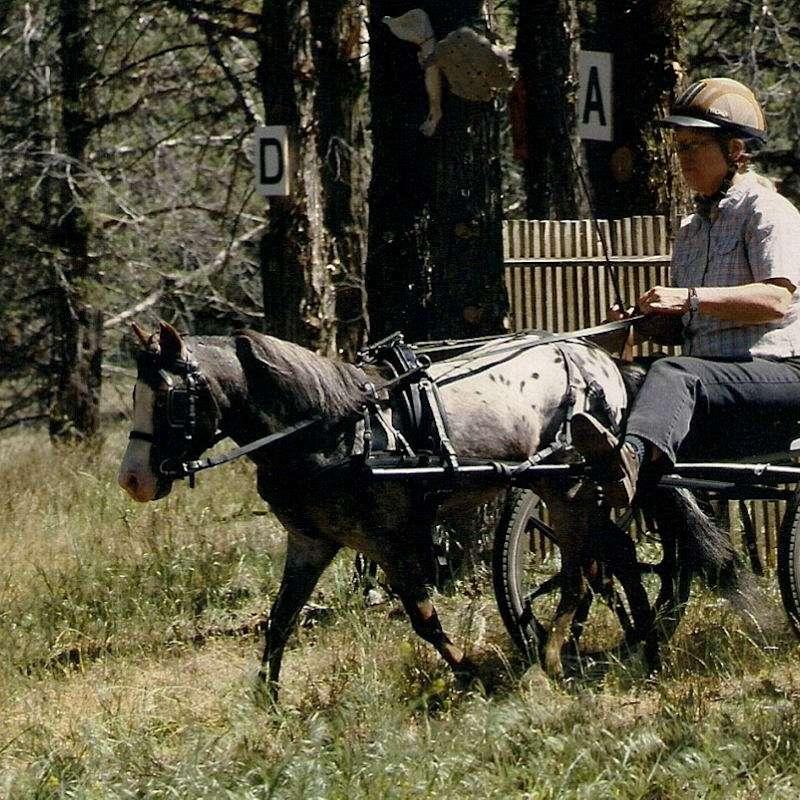 Walkingbear Farm Miniature Performance Horses
