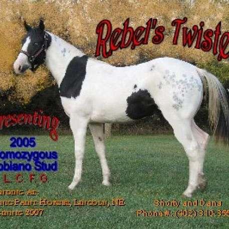 Scenic Paint Horses