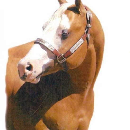 Bollier Paint Horses