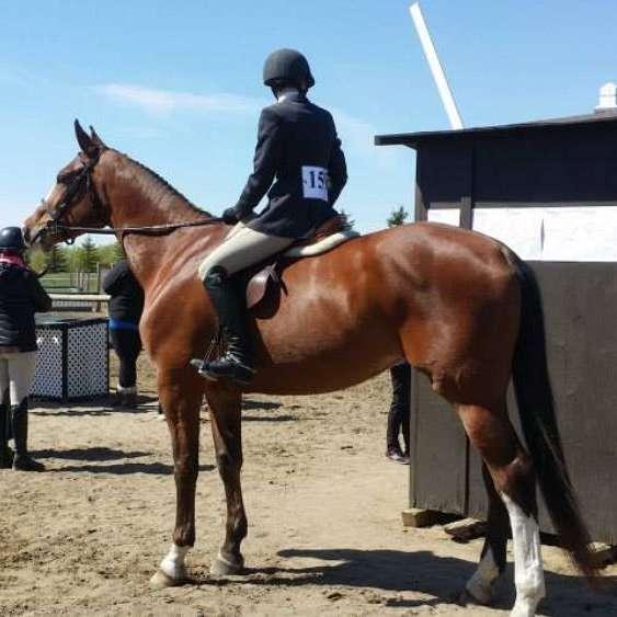 Premier Horse Connection