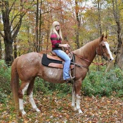 Blue Rose Run Horse Farm