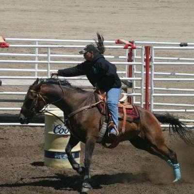 SL Barrel Horses