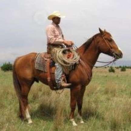 Beaver Valley Horse Company