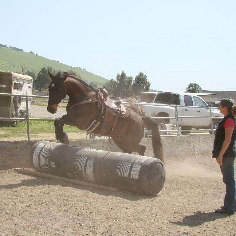 Kendra Wilson Natural Horsemanship