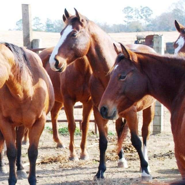 Weaver's Quarter Horses