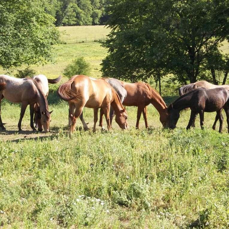 Reinhold Ranch