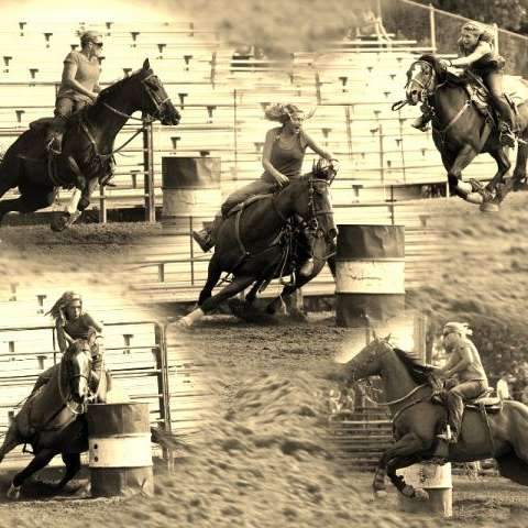 CA BARREL HORSES