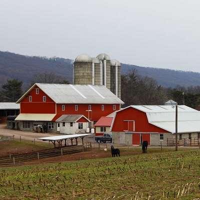 Lykens Valley Percheron Farm