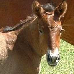 Avalon Mist Equine Rescue