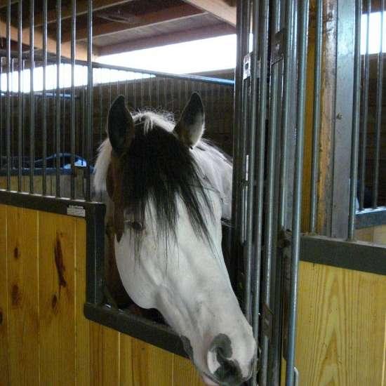 Colors of the Wind Horse  Farm LLC
