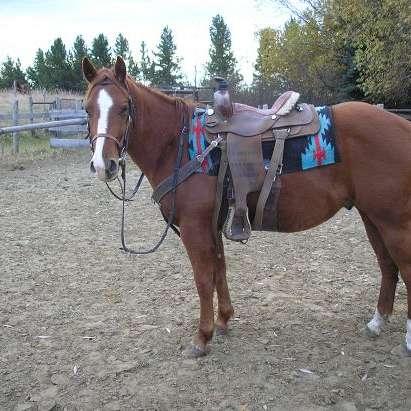 Erickson Outfit - Horse Sales