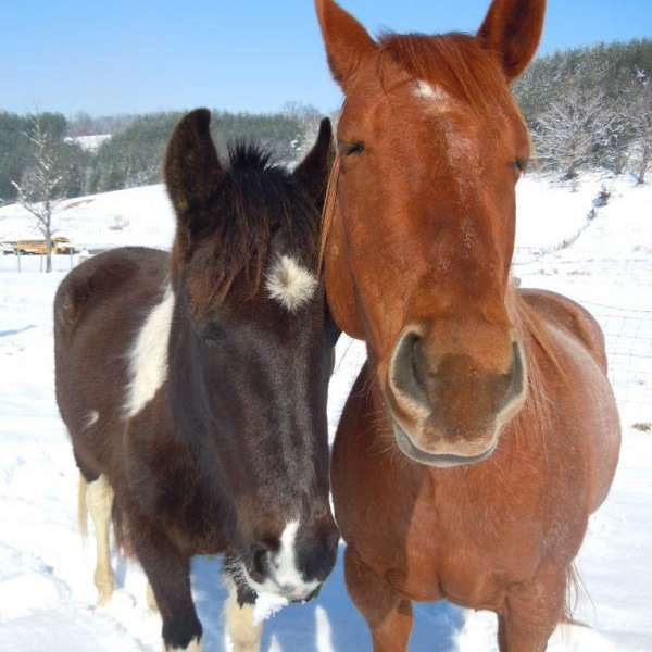 Crimson Acres Farm and Rescue