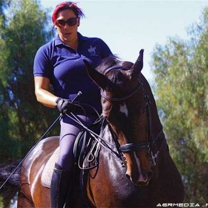 CB Sporthorses