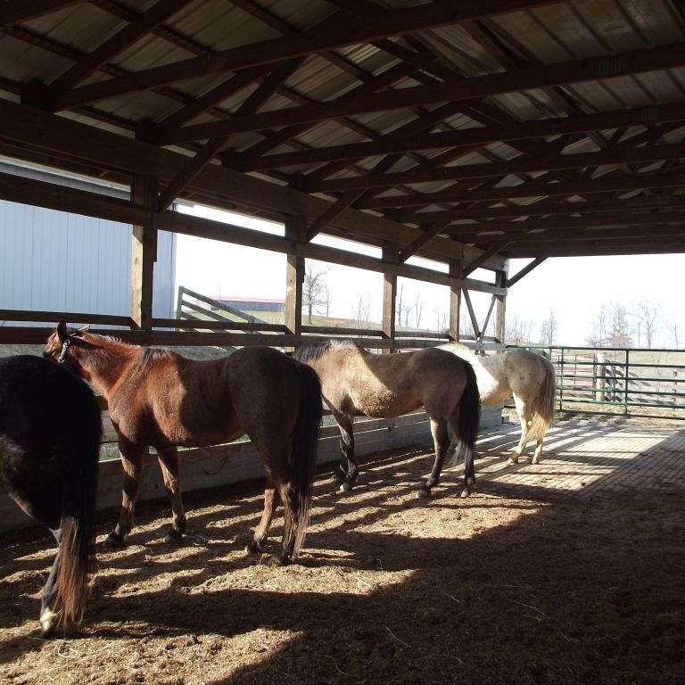 McLain Farms