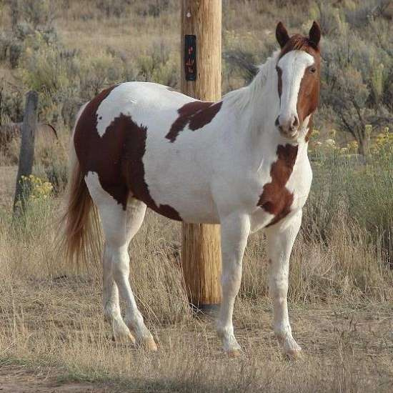 Cream Of The Crop Barrel Horses