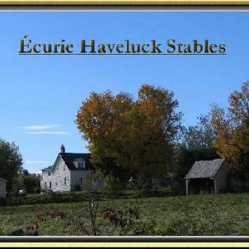 Haveluck Stables