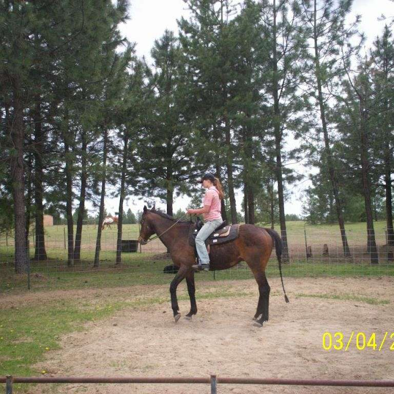 Heavens Outback personalized equine training