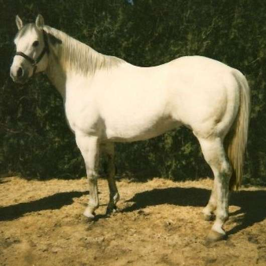 LACY QUARTER HORSES - Quarter horses for sale