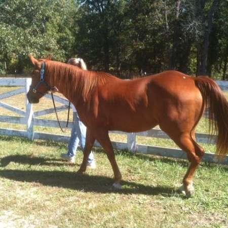 Circle H Horse farms of Missouri