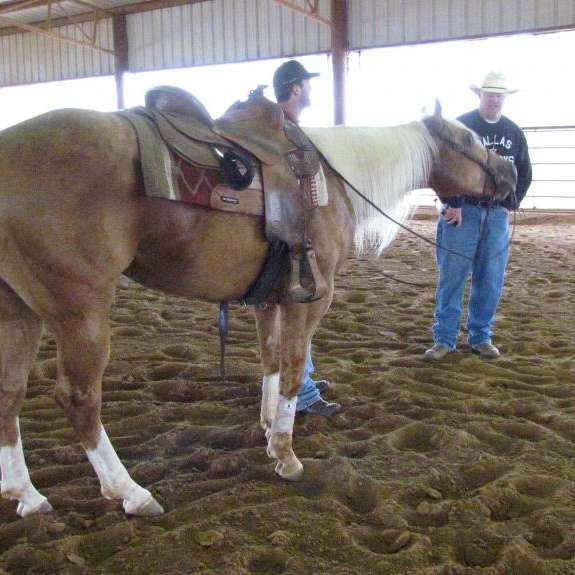 Graham Quarter Horses