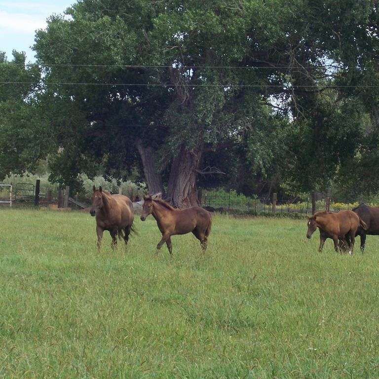 Western Livestock LLC