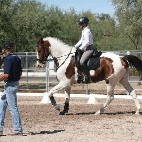 Amado Equine Hacienda