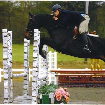 Select Sport Horses