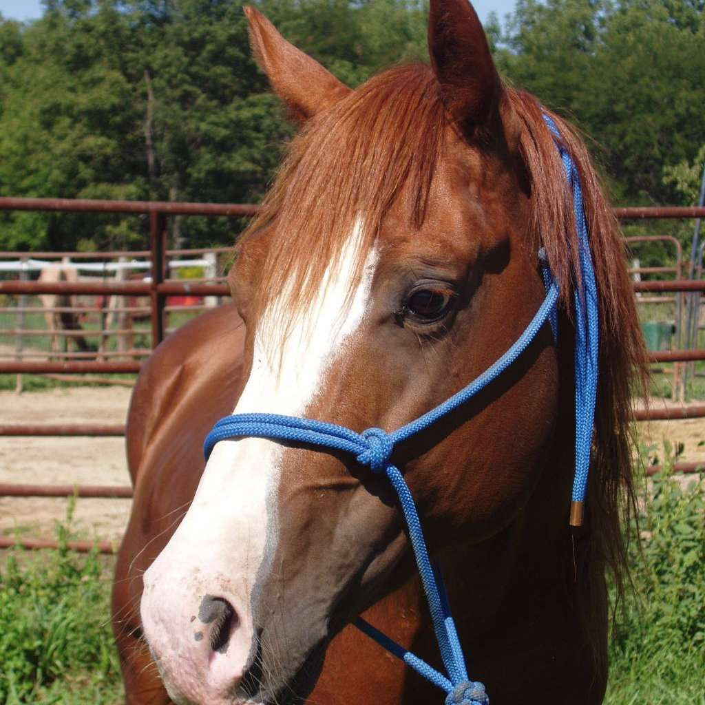 Rocking Heart Performance Horses
