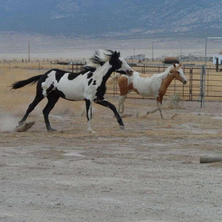 Clawson Ranch