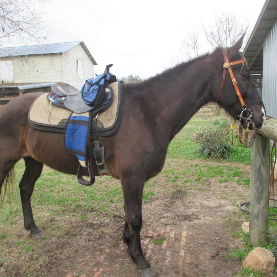 Trails' End Farm   www.gaitthetrail.com