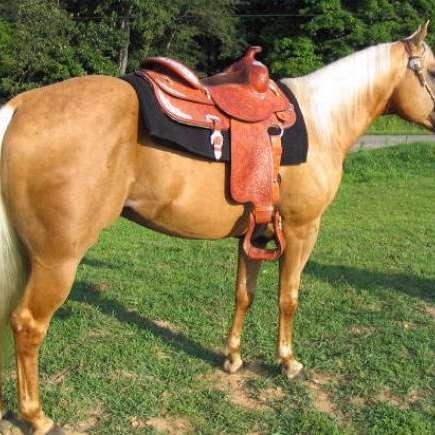 Yates Quarter Horses