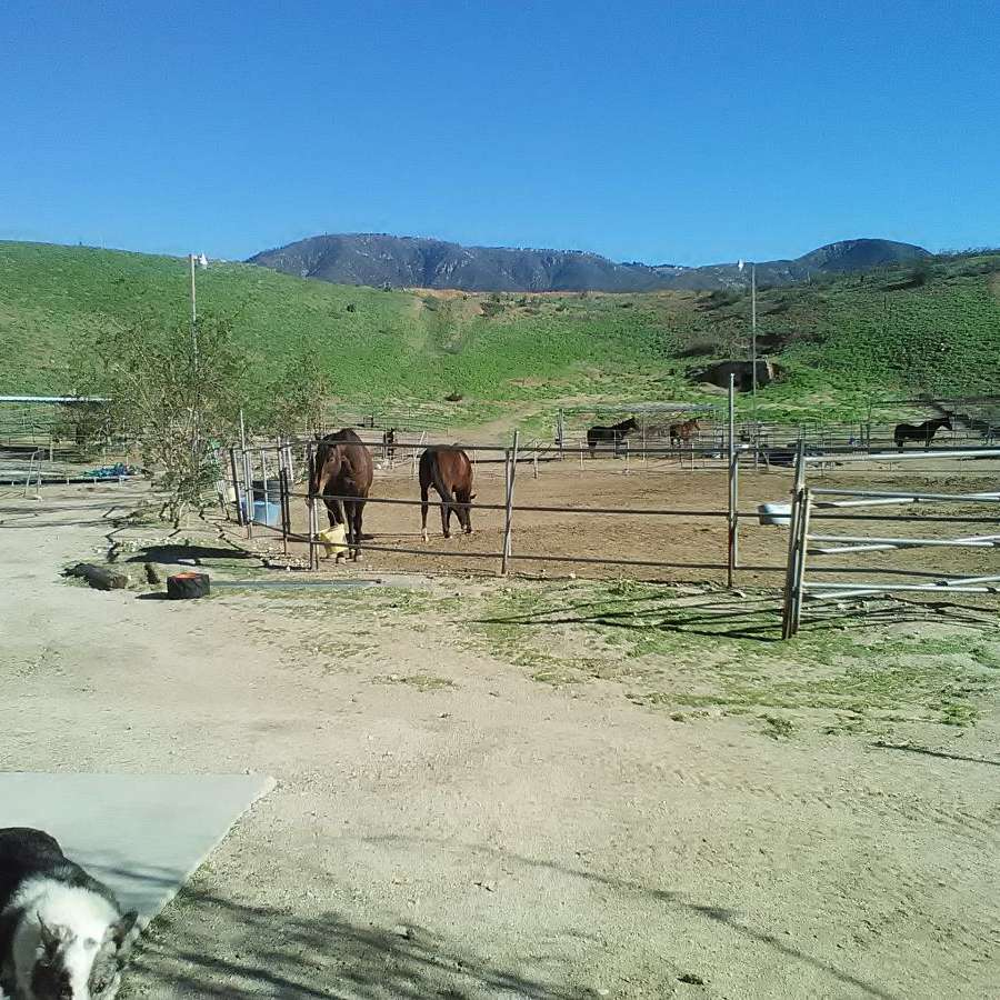 Horse Rescue Station