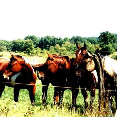 JZ Performance Horses
