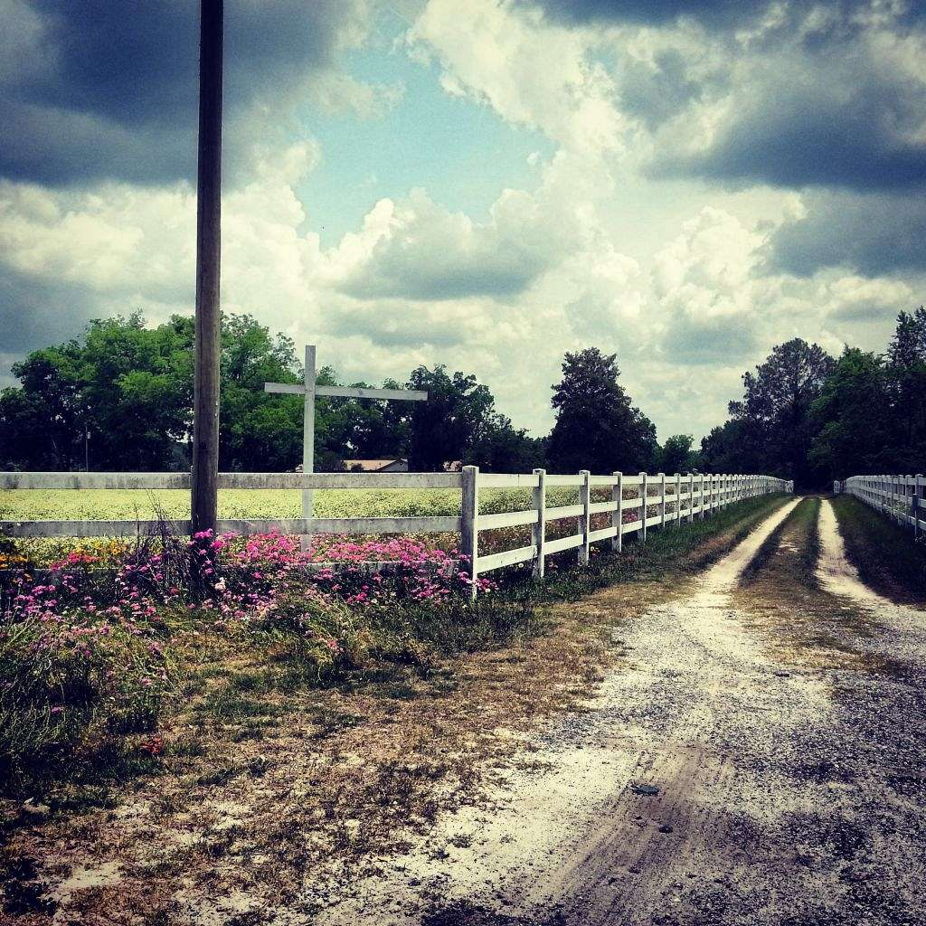 Last Minute Farm