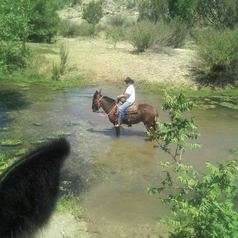 RILEYS PROFFESIONAL HORSE AND MULE TRAINING