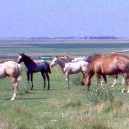 aa ranch