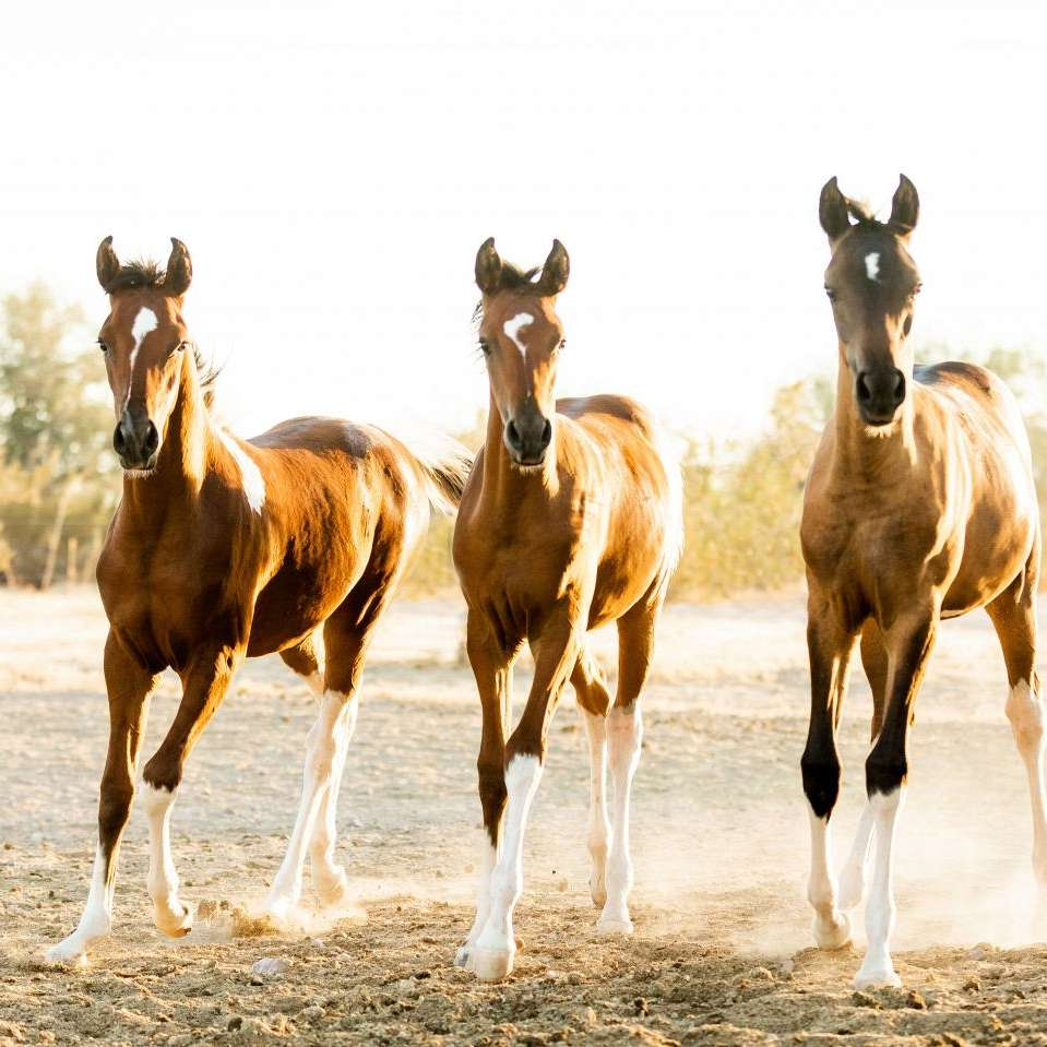 King Family Ranch
